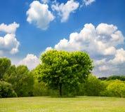 Idyllic spring landscape Stock Image