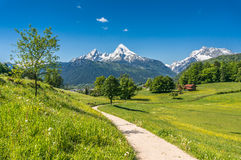 Idyllic spring landscape in the Alps with meadows and flowers royalty free stock photos