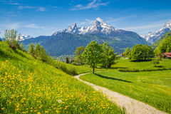 Idyllic spring landscape in the Alps with meadows and flowers Royalty Free Stock Photo
