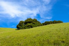 Idyllic spring landscape scene with a green grassy hillside dotted with wildflowers and oak trees royalty free stock photos