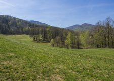 Idyllic spring mountain hills landscape with lush green grass, fresh deciduous and spruce tree forest, blue sky. Background, copy space, Jizerske hory, Czech royalty free stock photos