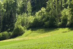 Idyllic spring scenery in Hohenlohe. Idyllic spring scenery at a forest edge in Hohenlohe (Southern Germany Stock Image