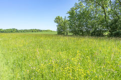 Idyllic spring time scenery Royalty Free Stock Photography