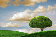 Idyllic Summer Day With One Tree. Beautiful outdoor vista with rolling hills and tree Royalty Free Stock Photography