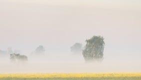 Idyllic summer landscape. Field in Poland Stock Image