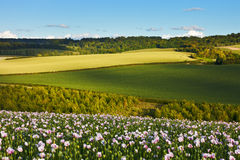 Idyllic summer landscape with poppies. An iyllic summer landscape view over the Chilterns, England, with dappled light and a field of opium poppies Stock Image