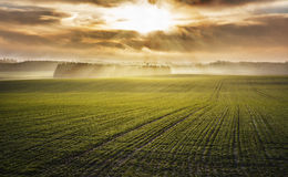 Idyllic sunrise over foggy autumn green fields Royalty Free Stock Images