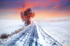 Idyllic sunset over winter meadow. With single tree Royalty Free Stock Image