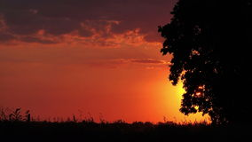 Idyllic Sunset with Silhouette of Lonely Solitary Tree stock footage