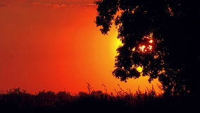 Idyllic Sunset with Silhouette of Lonely Solitary Tree stock video footage