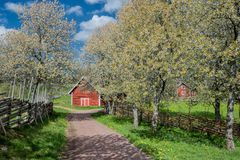 Idyllic Sweden at springtime Royalty Free Stock Images