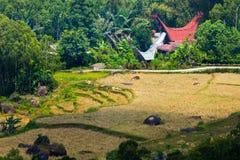 Idyllic traditional Toraja village Royalty Free Stock Image