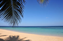 Idyllic tropical beach. Palm tree leaf casting shadow on idyllic tropical beach Royalty Free Stock Image
