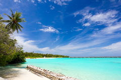 Idyllic tropical beach. Scenic view of palm tree on idyllic tropical beach with blue sky and cloudscape background, Maldives Stock Images