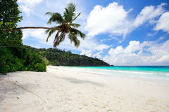 Idyllic tropical beach. On Mahe island at Seychelles Royalty Free Stock Photo