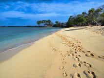 Idyllic tropical beach. Idyllic sandy tropical beach with palm trees and black lava rocks Royalty Free Stock Photography