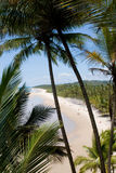 Idyllic tropical beach. High angle view of people on idyllic tropical beach viewed through palm tree, Bahia state, Brazil Stock Image