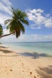 Idyllic tropical beach. Scenic view of palm tree on idyllic tropical beach, Republic of Trinidad and Tobago Stock Photos