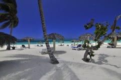 Idyllic tropical beach. Scenic view of palm trees and parasols on idyllic tropical beach Stock Photo