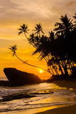 Idyllic tropical beach with silhouettes of palm trees. And cloudy sky on sunset in Sri Lanka Royalty Free Stock Photography