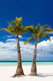 Idyllic tropical beach. Idyllic white sand tropical beach with palm trees on exotic island in Philippines Stock Photos