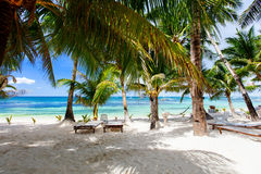 Idyllic tropical beach. Idyllic white sand tropical beach with palm trees on exotic island in Philippines Stock Photo