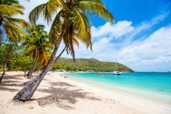 Idyllic beach at Caribbean. Idyllic tropical beach with white sand, palm trees and turquoise Caribbean sea water on Mayreau island in St Vincent and the royalty free stock photos