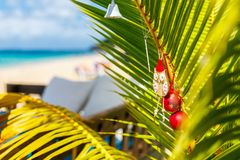 Idyllic beach at Caribbean. Idyllic tropical Caribbean beach with palm trees decorated for Christmas Royalty Free Stock Image
