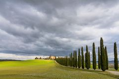 Idyllic Tuscan landscape with cypress alley near Pienza, Val d'Orcia, Italy Royalty Free Stock Photos