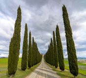 Idyllic Tuscan landscape with cypress alley near Pienza, Val d'Orcia, Italy Royalty Free Stock Image