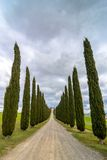 Idyllic Tuscan landscape with cypress alley near Pienza, Val d'Orcia, Italy Royalty Free Stock Photo