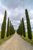 Idyllic Tuscan landscape with cypress alley near Pienza, Val d'Orcia, Italy Stock Photos