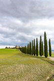 Idyllic Tuscan landscape with cypress alley near Pienza, Val d'Orcia, Italy Royalty Free Stock Photography