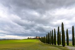 Idyllic Tuscan landscape with cypress alley near Pienza, Val d'Orcia, Italy Stock Images