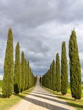 Idyllic Tuscan landscape with cypress alley near Pienza, Val d'Orcia, Italy Stock Photo