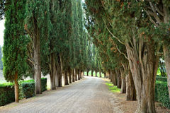 Cypress valley Stock Photography