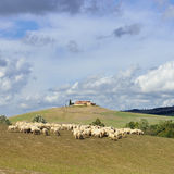 Tuscan landscape Royalty Free Stock Photos