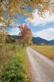 Idyllic view through golden birch leaves, walkway at moor landsc. Idyllic view through golden birch leaves, walkway along moor landscape unterammergau, upper Stock Image