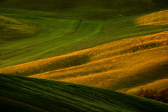 Idyllic view of hilly farmland in Tuscany in beautiful morning light, Italy. Landscape in the Italy. Morning light in the field. Royalty Free Stock Photos