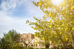 Idyllic view with lemon tree in historic spain village deia. On the island Majorca stock photos