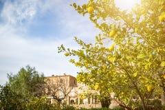 Idyllic view with lemon tree in historic spain village deia Stock Photos