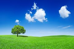 Idyllic view, lonely tree on green field. Idyllic landscape, lonely tree among green fields, in the background blue sky and white clouds stock image