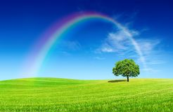 Idyllic view, lonely tree with rainbow on green field. Idyllic landscape, lonely tree with rainbow among green fields, in the background blue sky and white stock photography