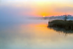Idyllic View of Morning Fog over Lake and rising Sun. Lonely Tree staying on Coast royalty free stock images