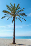 Idyllic view on palm against of blue seascape Stock Image