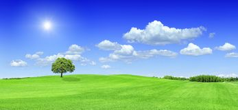 Idyllic view, the sun shining over a lonely tree standing on gre. Panoramic idyllic landscape, the sun shining over a lonely tree standing among green fields royalty free stock images