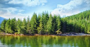 Trees growing by river during sunny day Stock Images