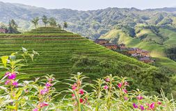 Idyllic village with terraced rice fields. Royalty Free Stock Photo