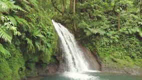Idyllic waterfall and amazing nature. Wild river in jungle forest. Cascade aux Ecrevisses, Guadeloupe, Caribbean. Idyllic waterfall and amazing nature. Wild stock video
