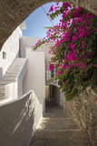 Idyllic way through cycladic white houses and pink flowers Stock Photos